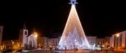 Caldas_Tree