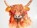 Bad hair day - Highland Cattle