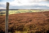 Coast to Coast Signpost on the North Yorkshire moors