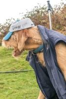 Alfie - bad dog day