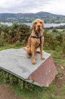 Alfie on Wainwright's Sitting Stone