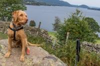 Alfie at Ullswater