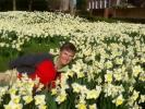 daffodils_lorna.jpg